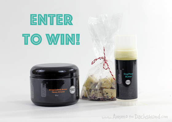 U+ Naturals Paw Butter Review & Giveaway // Ammo the Dachshund