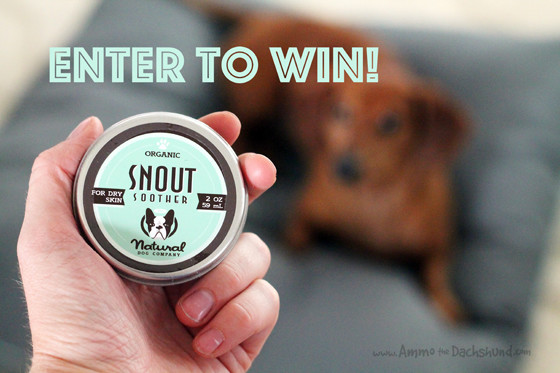 Natural Dog Company Snout Smoother // Ammo the Dachshund