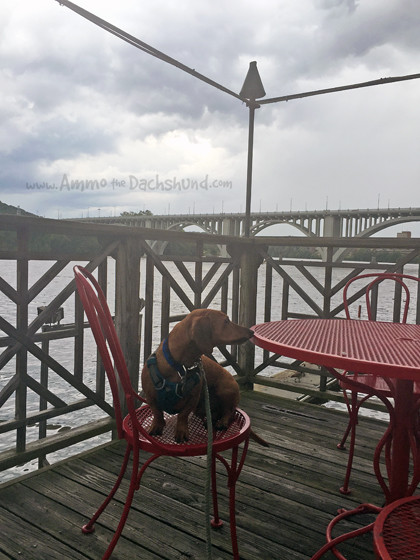 Waterfront Dining // Ammo the Dachshund