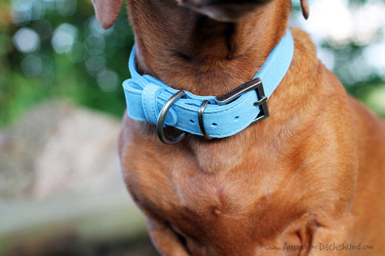 Doggie Days Boutique Review & Giveaway // Ammo the Dachshund