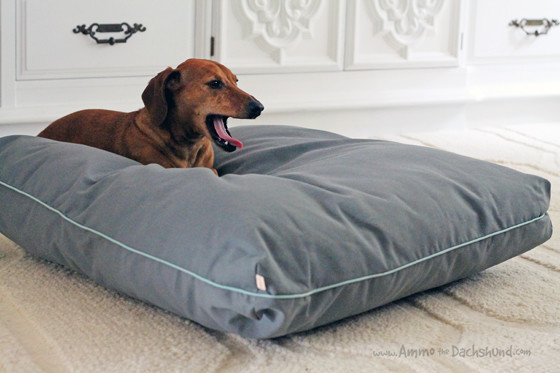 Peach Industries Kickstarter Campaign for a Puffer Dog Bed! with Ammo the Dachshund