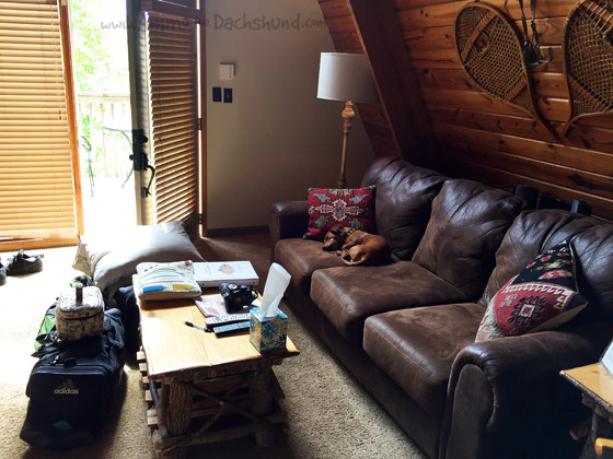 Pet Friendly Cabin in Gatlinburg Tennessee with Ammo the Dachshund