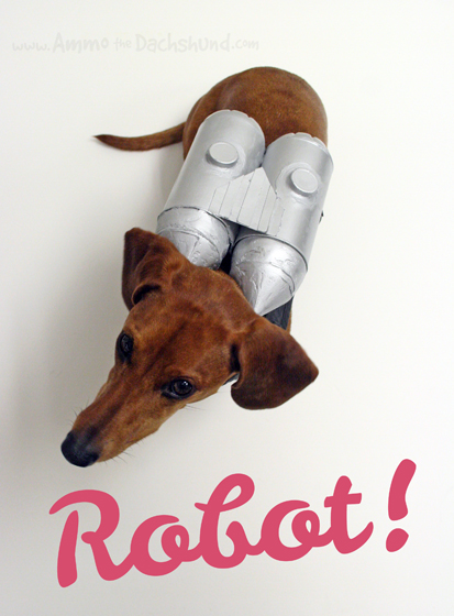 How Ammo the Dachshund got his name - And the name that almost was, Robot!