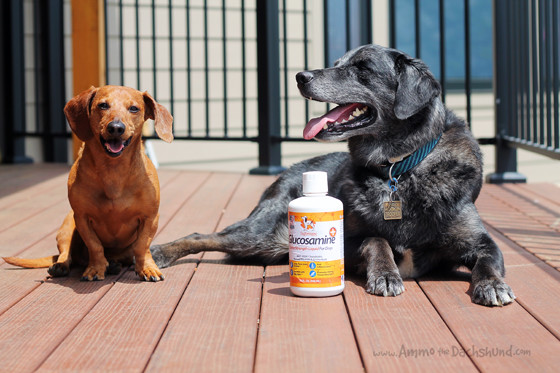 TaylorHappy Glucosamine Supplement for Dogs // Review & Giveaway // Ammo the Dachshund