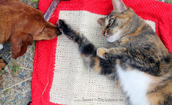 Dogs & Cats Play // Cat Play Mat & Bully Sticks from Chewy.com
