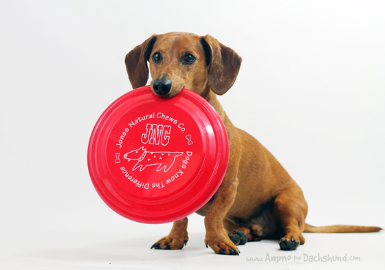 Jones Natural Dog Chews Review & Giveaway // Ammo the Dachshund