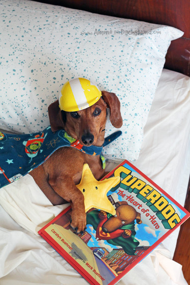Super Hero Bedtime Story with Ammo the Dachshund