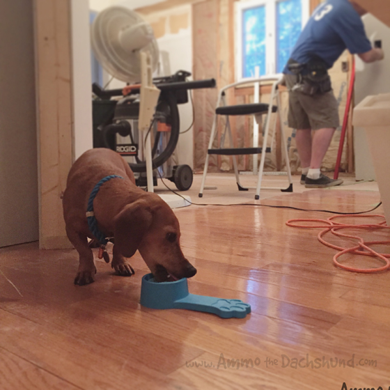 Working Weekend - Ammo the Dachshund gets a new Kitchen