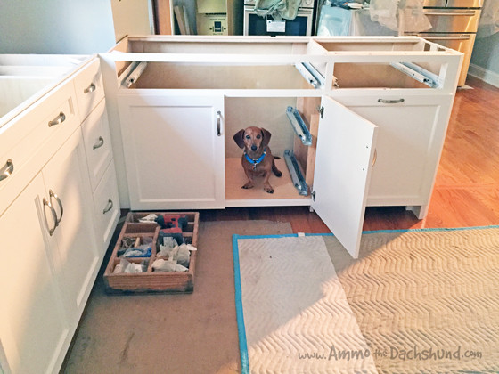 Weekend Kitchen Renovation Update with Ammo the Dachshund