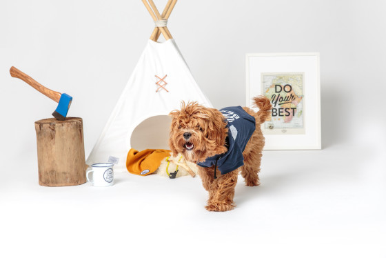 Friday Fetch: Camp Cloon Adventure Dog Gear from Ammo the Dachshund