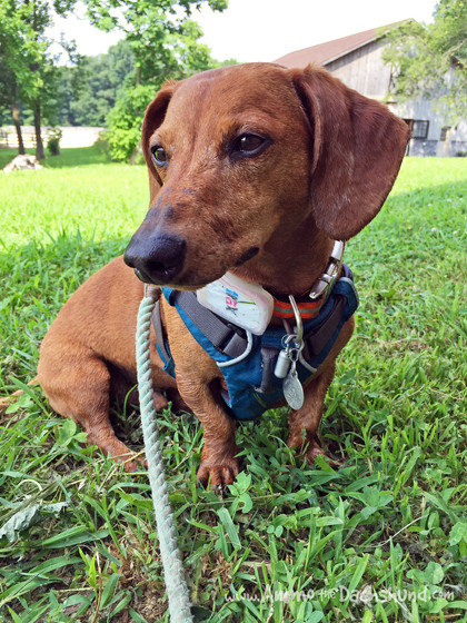 Trax GPS Pet Tracker to Keep Dogs Safe + A Giveaway