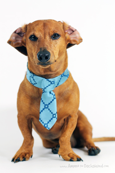 Vintage Neckties for Dogs + A Giveaway