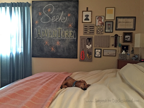 dog-on-king-bed