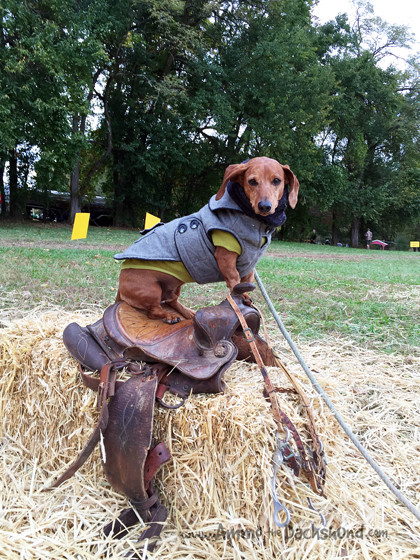 Fairhill International Cross Country Adventure with Ammo the Dachshund