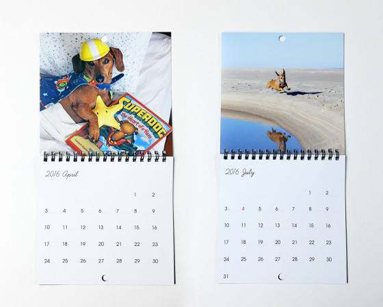 New in the Shop! Ammo the Dachshund's 2016 Calendar to benefit the SPCA
