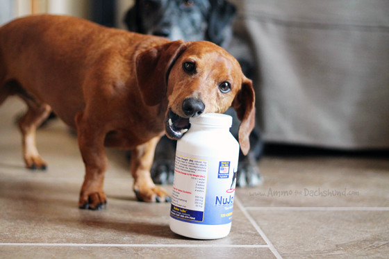 NuVet Joint Supplements - Great Tasting Glucosamine your dog will love