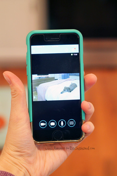 A Wireless Camera to Monitor your Pet + A Giveaway