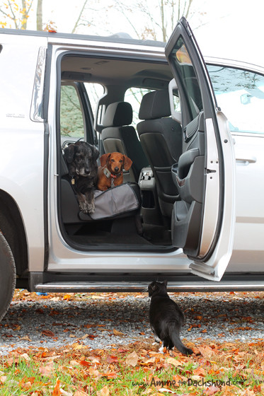 how to keep dog away from car with sound