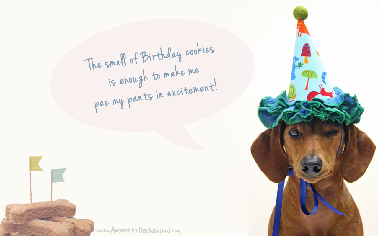 Birthday Week Desktop Wallpaper Download Ammo The Dachshund