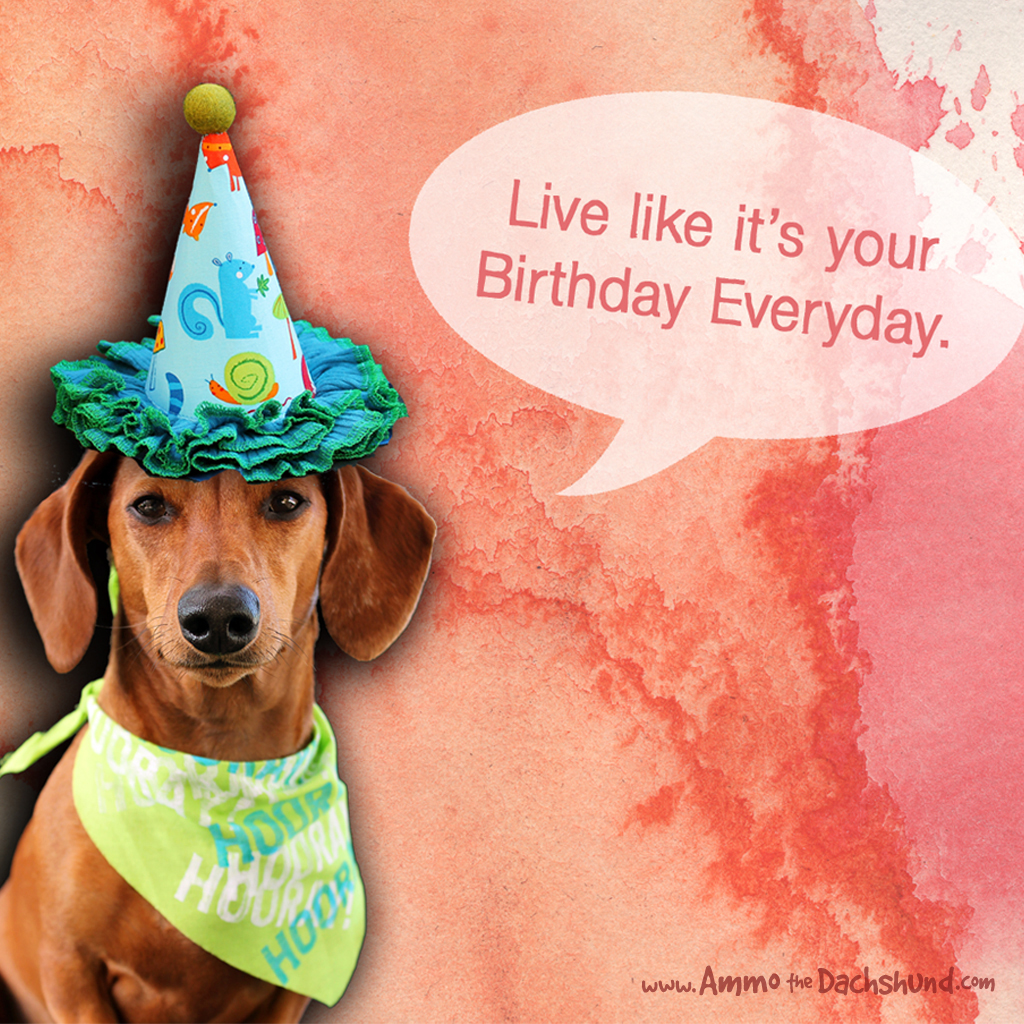Birthday Week Free Dachshund B Day Desktop Wallpaper Ammo The